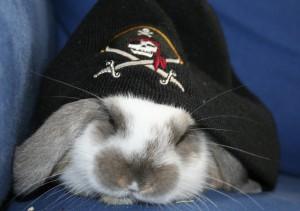 pirate_bunny_by_daechick